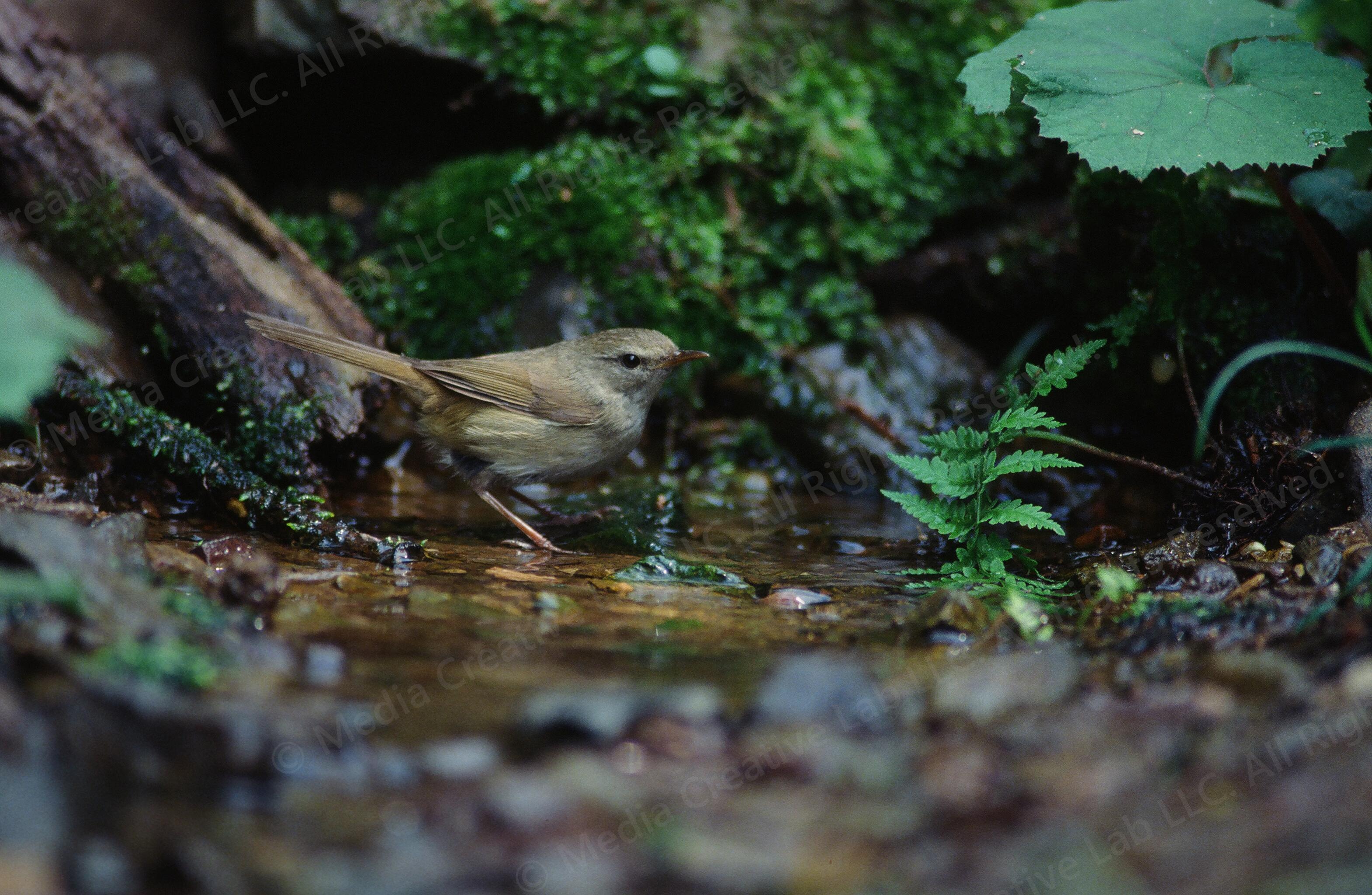 wildbird_picture